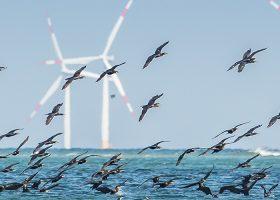 Ornit éoliennes