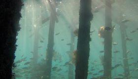 pixabay underwater bandeau desktop