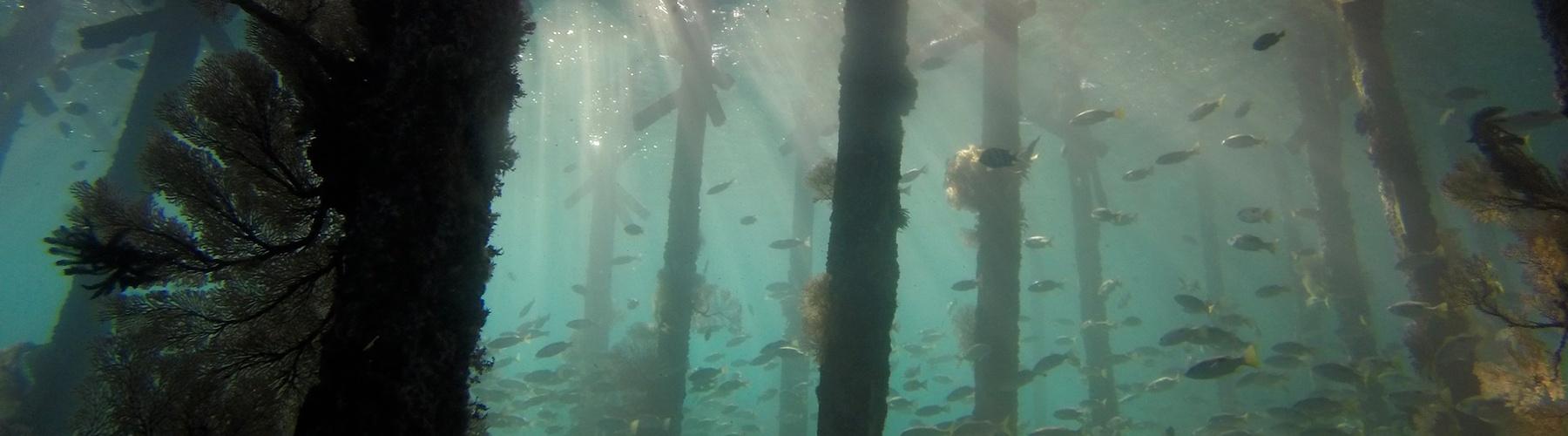Fish Intel: Monitoring pelagic fish
