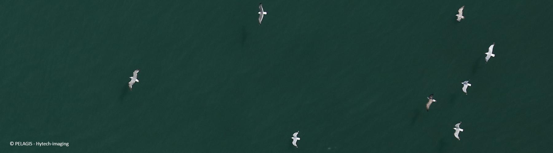 Suivi de la mégafaune marine par imagerie aérienne